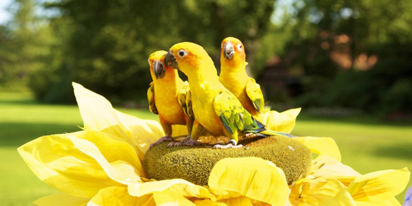 VogelsparkWalsrode